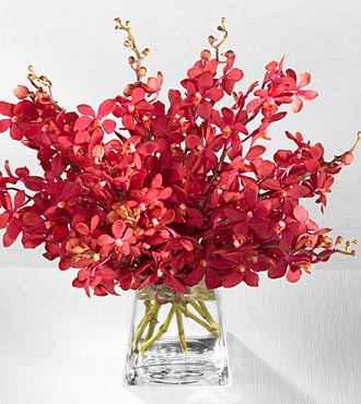 12 Pcs Red Vanda Orchids In A Vase To Cebu Delivery Orchid To Cebu